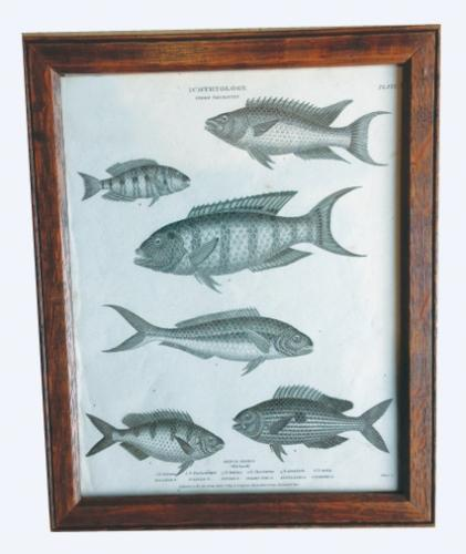 Georgian Fish Etching
