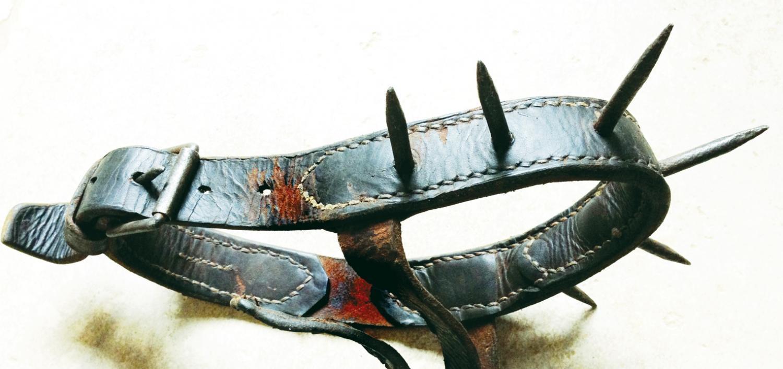 Antique Calf (Anti suckling) collar