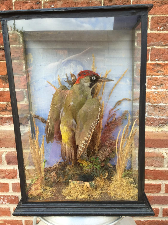 Victorian Mounted Green Woodpecker