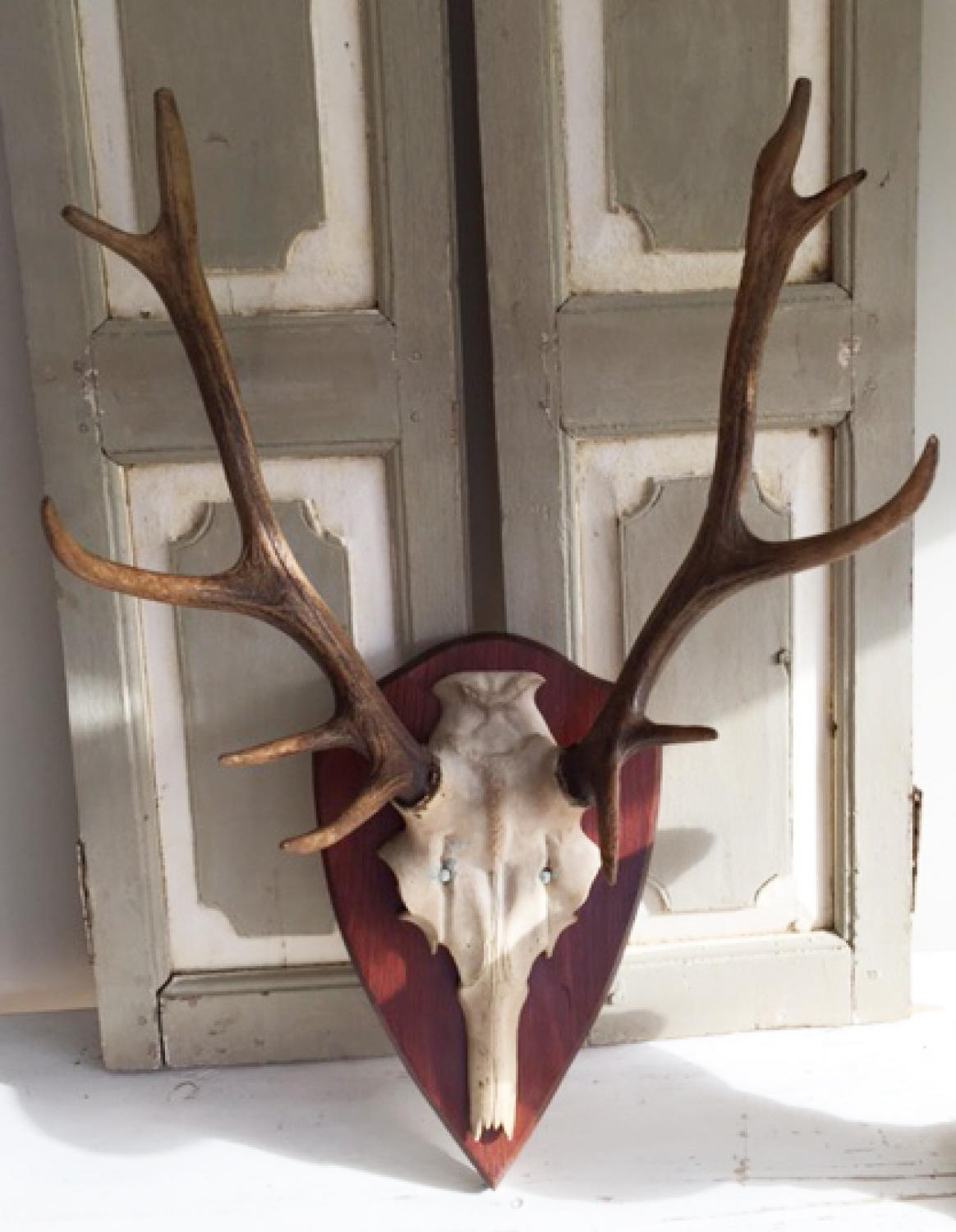 Antique Mounted Antlers