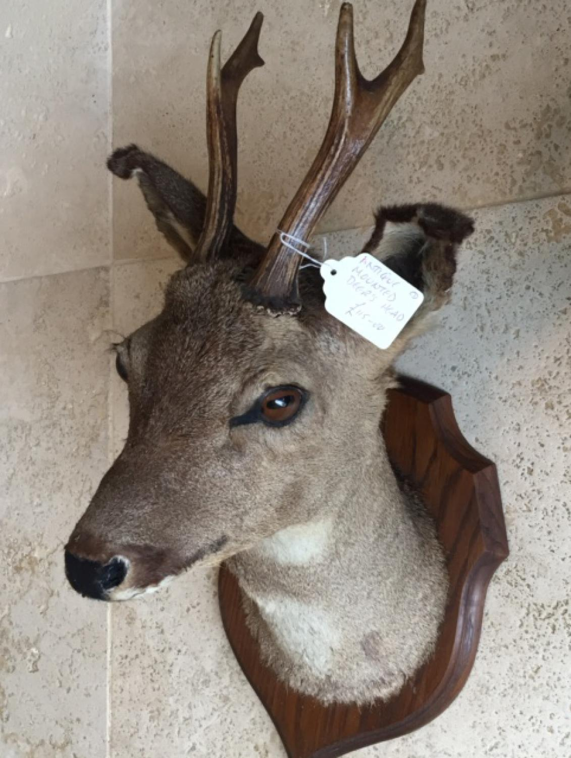 Antique Mounted Deer's Head