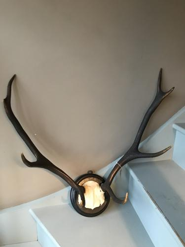 Antique Antlers