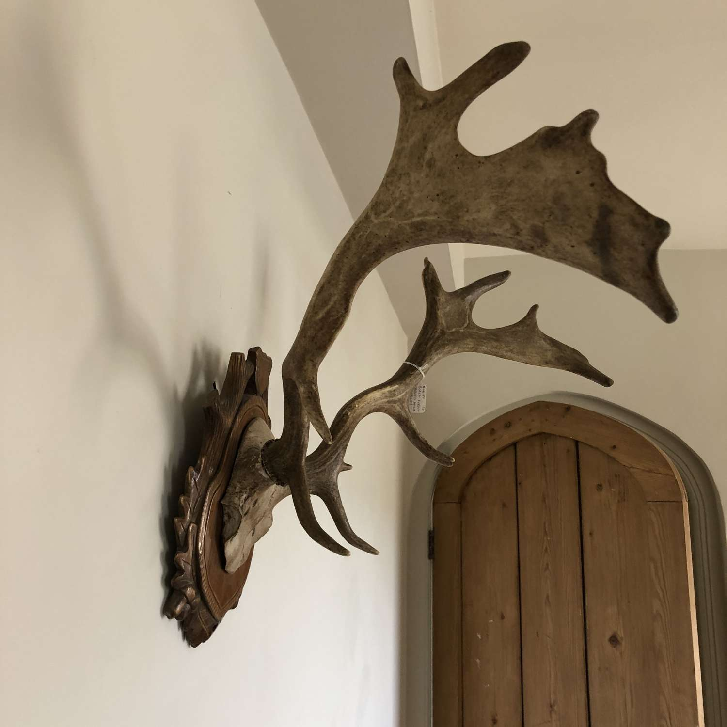 Mounted Antlers on carved shield