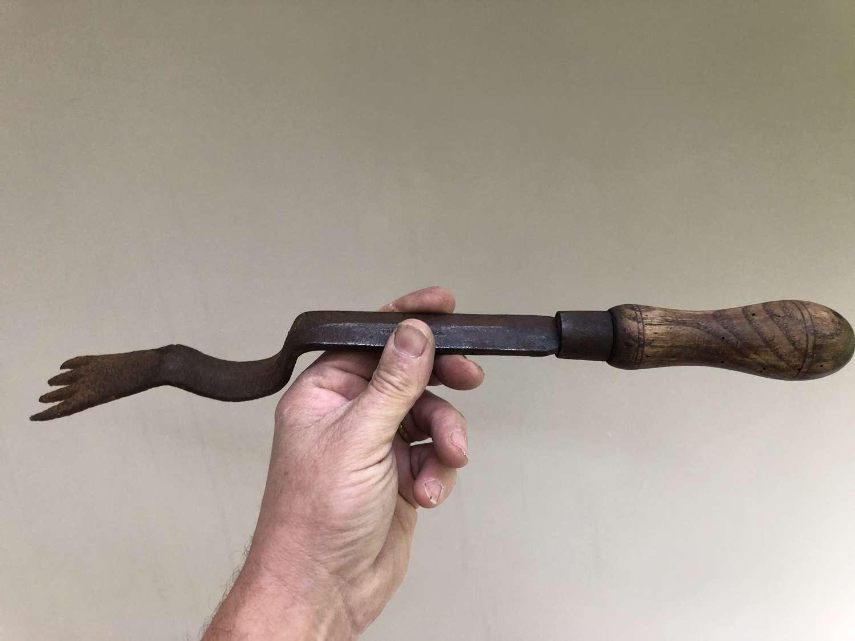 Unusual Buttercup Fork